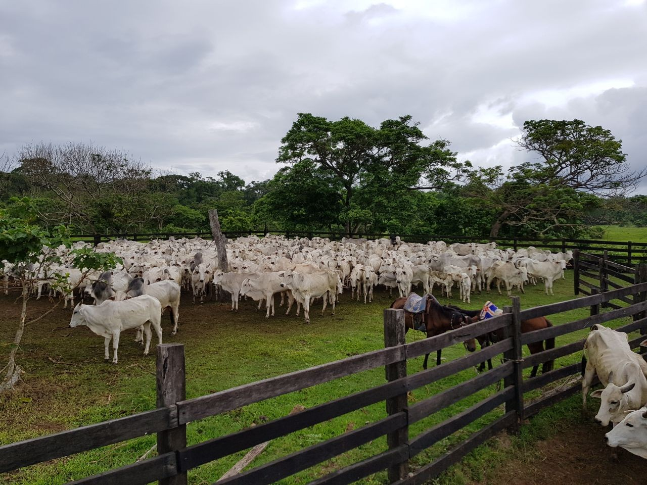 Terreno en Venta Zona terebinto a a 33 km del puente del Urubo Foto 8
