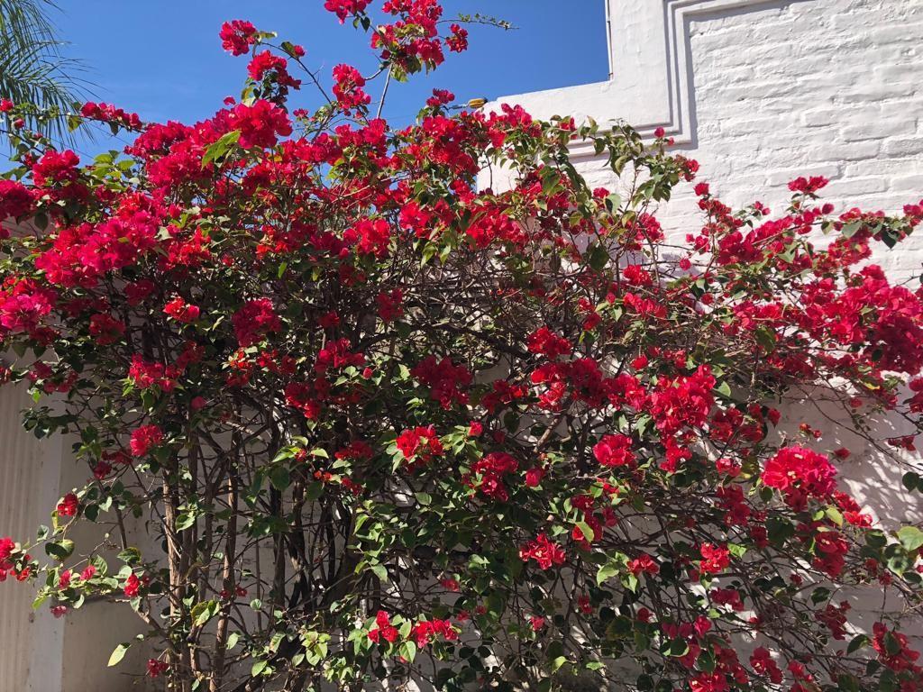 Casa en Alquiler Av Piraí y 4to anillo  Foto 26