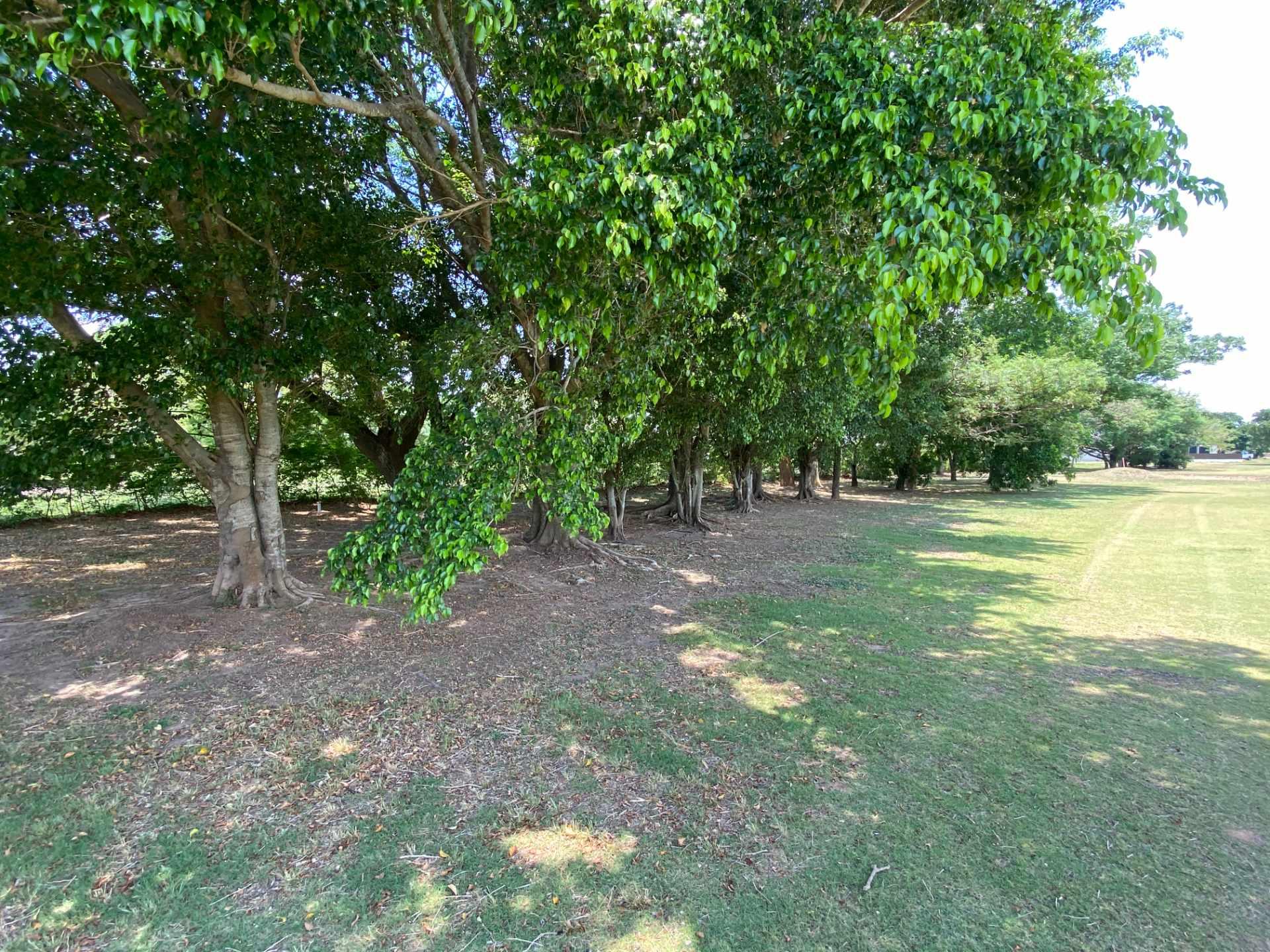 Terreno en Venta Casa Campo Country Golf Club Foto 5