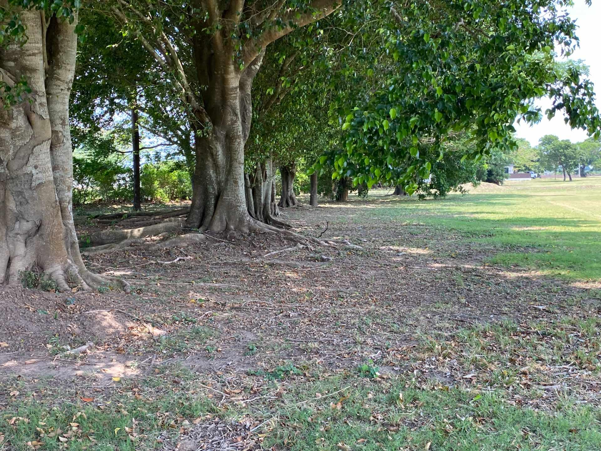 Terreno en Venta Casa Campo Country Golf Club Foto 3